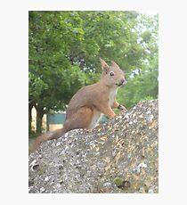 Hi There (Wild squirrel) Photographic Print