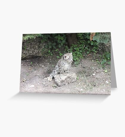 One day I'll be bigger than this rock... Greeting Card