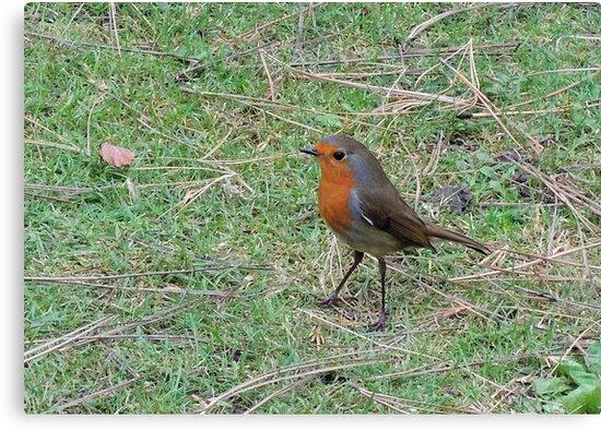 Robin Profile by CreativeEm