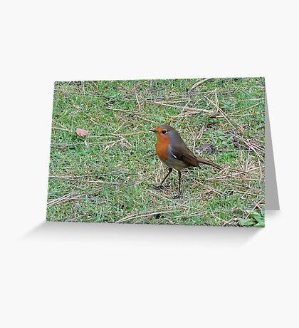 Robin Profile Greeting Card