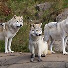 The Three - Parc Omega by Josef Pittner