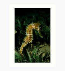 Thorny Seahorse Art Print
