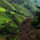 Emerald Hills by Thomas Dawson