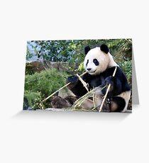 Chop Sticks - Funi   - Adelaide Zoo's Female Panda Greeting Card