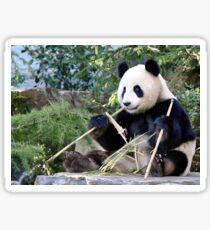 Chop Sticks - Funi   - Adelaide Zoo's Female Panda Sticker