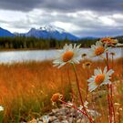 Wild about Daisy by James Anderson