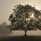 Misty Trees by Mike Paget