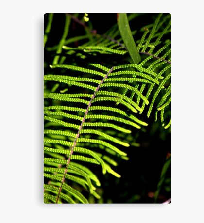 North Head Manly - Pauched Coral Fern Canvas Print