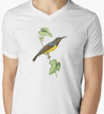 Javanese Creeper Bird Illustration by William Swainson Mens V-Neck T-Shirt