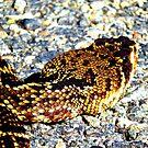 rattlesnake by tomcat2170