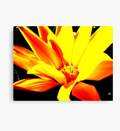Touch of colour Canvas Print