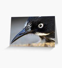 Photographers reflection in the eye of this New Holland Honeyeater (Phylidonyris novaehollandiae) Greeting Card