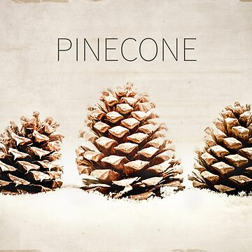 Pinecone by TerriEllisPhoto