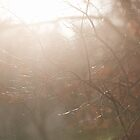 December Light by Sarah Ciccone Photography