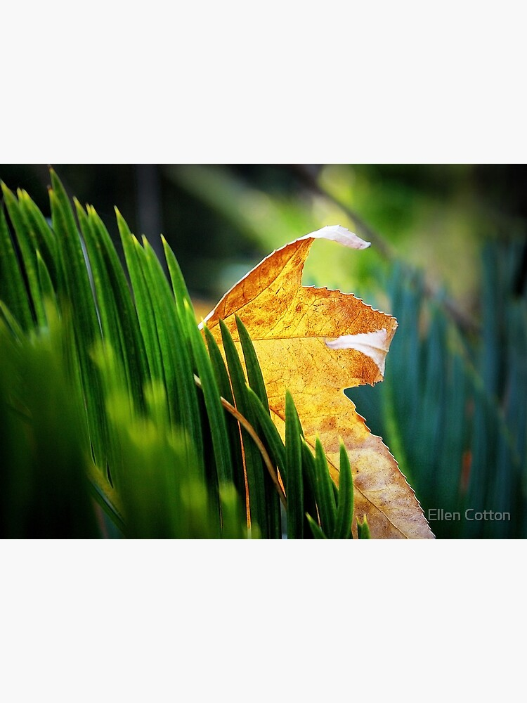 Leaves of Grass by ellcot