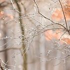 Winter Berries by Sarah Ciccone Photography