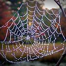 Web by Sandra Pearson