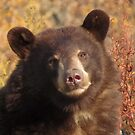Wonder bear by Alex Call