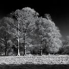 Moulton Grange in Infra Red by StephenRB