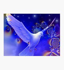 Peaceful Dove Photographic Print
