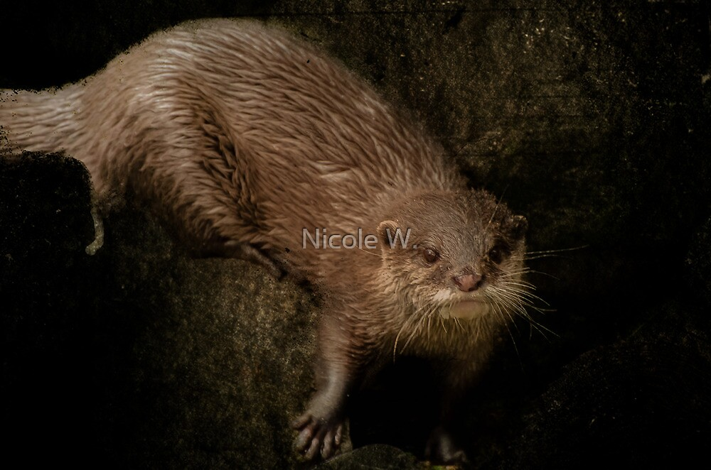 otter by Nicole W.