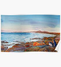 Friendly Beaches with Fairy Penguins Poster