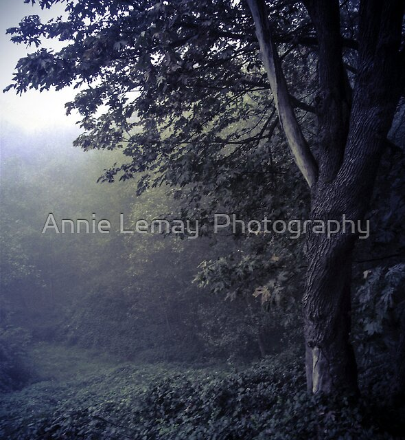 Autumn Blues by Annie Lemay  Photography