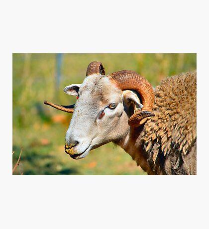 Ram Photographic Print