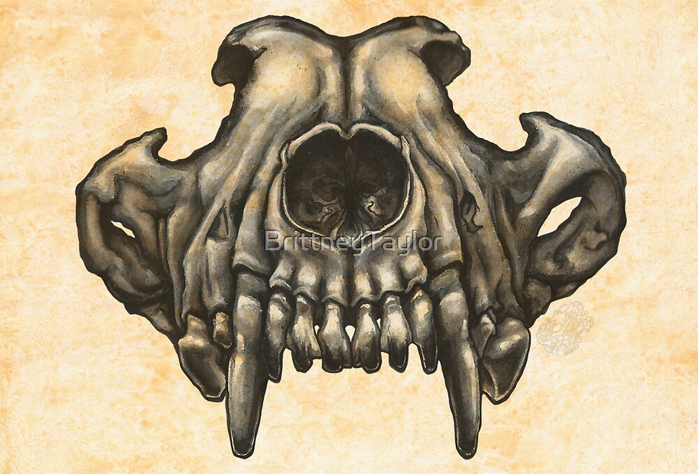 Wolf Skull (Black & White) by Brittney Lawrence