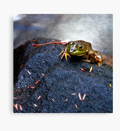 Mountain Frog on a Rock Canvas Print