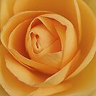 Butter Cream Rose by edesigns14