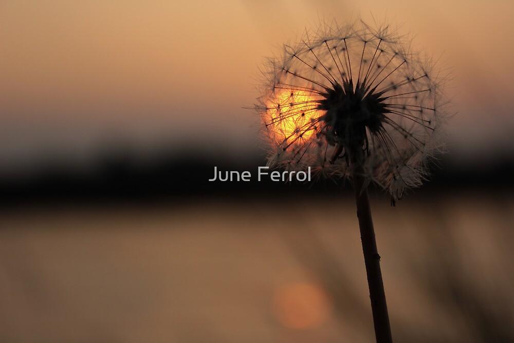 ALONE by June Ferrol