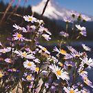 Mt. Hood's Little Daisy Friends by Jenny Miller