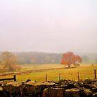 Gloomy Fall Day by chrstnes73