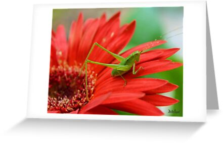 The Grasshopper and the Daisy by Mattie Bryant
