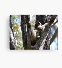 I'm A Hubbard's Sportive Lemur Canvas Print
