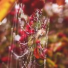 Dew drops, spider webs and apples, oh my! by Jenny Miller