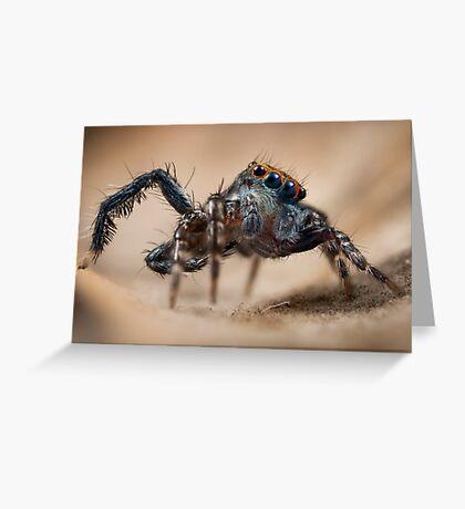 'Saitis virgatus' Greeting Card