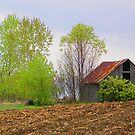 The old shed by marchello