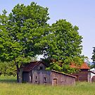 Sheds by the  trees by marchello