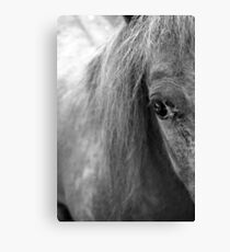 A Horse's Eye Canvas Print