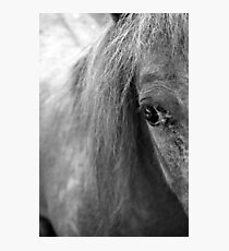 A Horse's Eye Photographic Print
