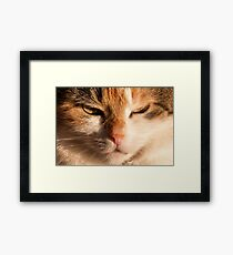 Content Cat Face Framed Print