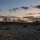 Gidgee Dusk by Jason Ruth