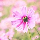 Lovely Pink Cosmos Flower Field Vintage Paper by Beverly Claire Kaiya