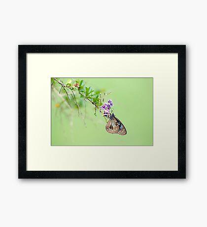 Butterfly Blue Framed Print