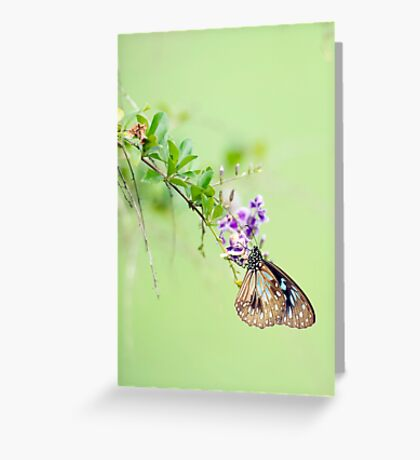 Butterfly Blue 2 Greeting Card