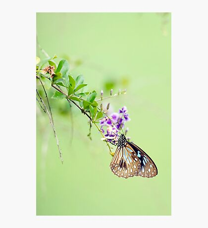 Butterfly Blue 2 Photographic Print