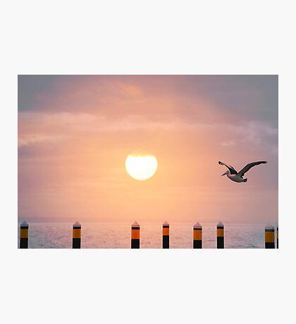 Sunset Pelican Photographic Print