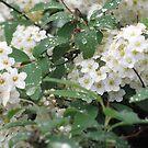 Flowering #2 by kossimarsalsa